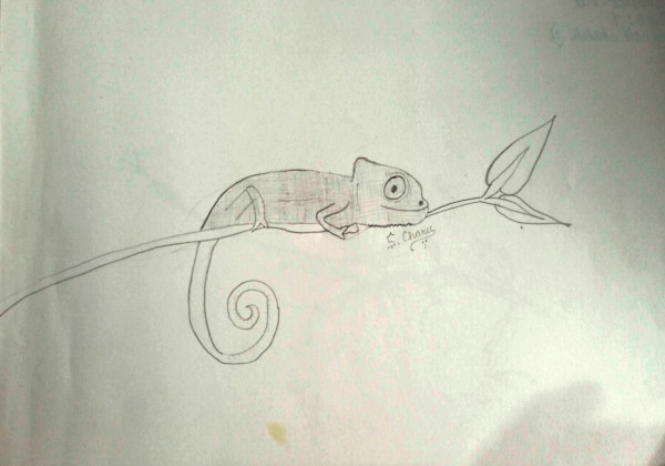 Chameleon hand sketch drawn by Charu Nethra